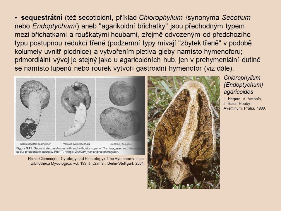 sequestrátní (též secotioidní, příklad Chlorophyllum /synonyma Secotium nebo Endoptychum/) aneb agarikoidní břichatky jsou přechodným typem mezi břichatkami a rouškatými houbami, zřejmě odvozeným od předchozího typu postupnou redukcí třeně (podzemní typy mívají zbytek třeně v podobě kolumely uvnitř plodnice) a vytvořením pletiva gleby namísto hymenoforu; primordiální vývoj je stejný jako u agaricoidních hub, jen v prehymeniální dutině se namísto lupenů nebo rourek vytvoří gastroidní hymenofor (viz dále).