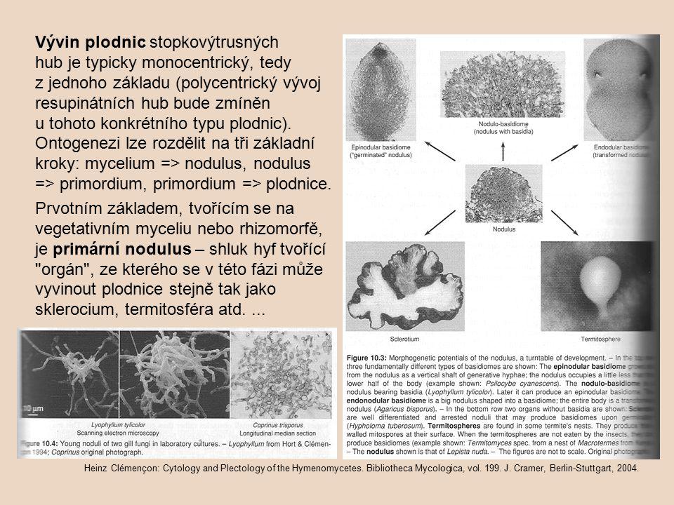 Vývin plodnic stopkovýtrusných hub je typicky monocentrický, tedy z jednoho základu (polycentrický vývoj resupinátních hub bude zmíněn u tohoto konkré