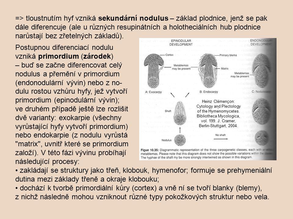 Postupnou diferenciací nodulu vzniká primordium (zárodek) – buď se začne diferencovat celý nodulus a přemění v primordium (endonodulární vývin) nebo z no- dulu rostou vzhůru hyfy, jež vytvoří primordium (epinodulární vývin); ve druhém případě ještě lze rozlišit dvě varianty: exokarpie (všechny vyrůstající hyfy vytvoří primordium) nebo endokarpie (z nodulu vyrůstá matrix , uvnitř které se primordium založí).