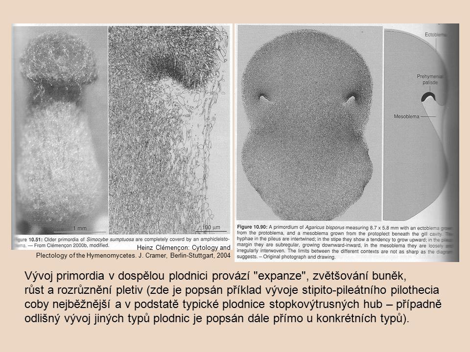 Vývoj primordia v dospělou plodnici provází expanze , zvětšování buněk, růst a rozrůznění pletiv (zde je popsán příklad vývoje stipito-pileátního pilothecia coby nejběžnější a v podstatě typické plodnice stopkovýtrusných hub – případně odlišný vývoj jiných typů plodnic je popsán dále přímo u konkrétních typů).