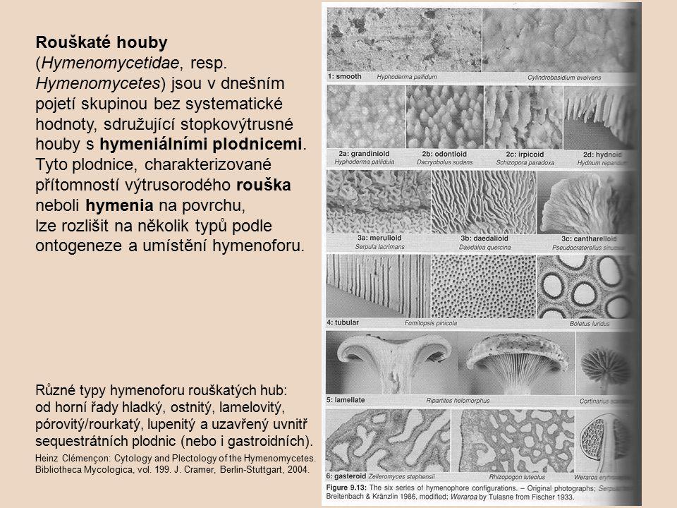 Rouškaté houby (Hymenomycetidae, resp.