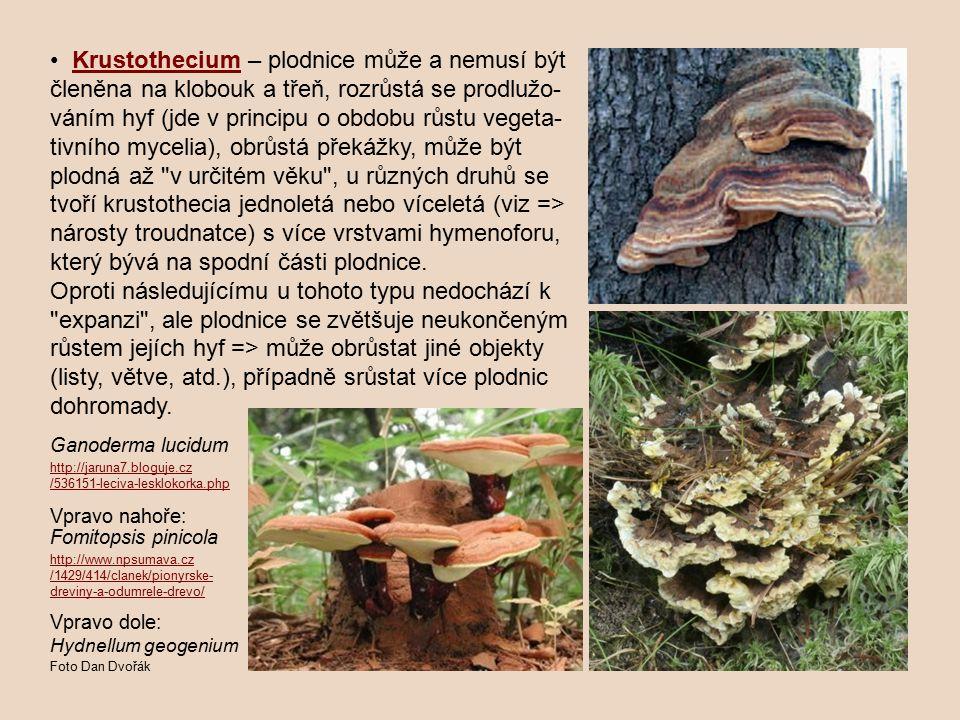 Krustothecium – plodnice může a nemusí být členěna na klobouk a třeň, rozrůstá se prodlužo- váním hyf (jde v principu o obdobu růstu vegeta- tivního m