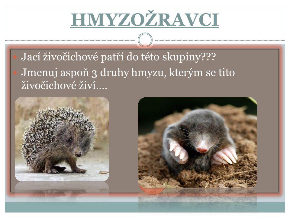 HMYZOŽRAVCI Jací živočichové patří do této skupiny??.