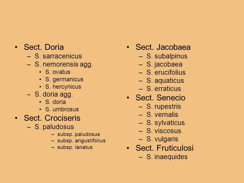 Sect. Doria –S. sarracenicus –S. nemorensis agg. S. ovatus S. germanicus S. hercynicus –S. doria agg. S. doria S. umbrosus Sect. Crociseris –S. paludo