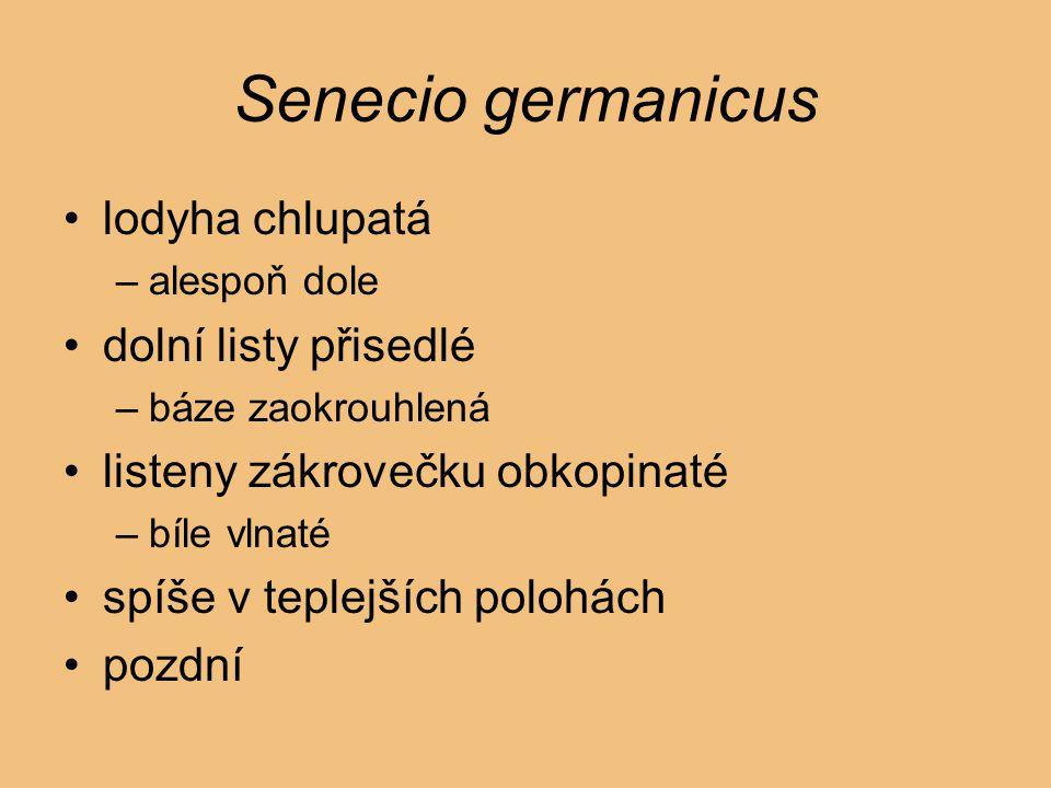 Senecio germanicus lodyha chlupatá –alespoň dole dolní listy přisedlé –báze zaokrouhlená listeny zákrovečku obkopinaté –bíle vlnaté spíše v teplejších