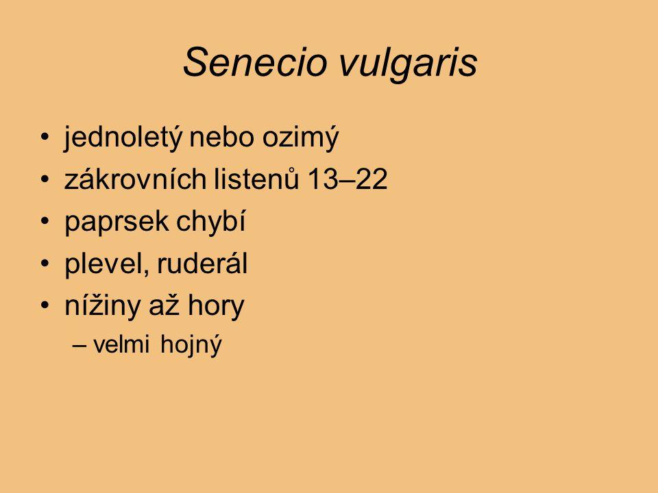 Senecio vulgaris jednoletý nebo ozimý zákrovních listenů 13–22 paprsek chybí plevel, ruderál nížiny až hory –velmi hojný