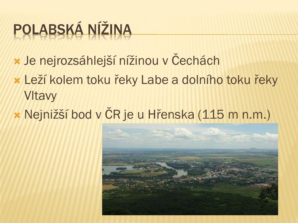  Je nejrozsáhlejší nížinou v Čechách  Leží kolem toku řeky Labe a dolního toku řeky Vltavy  Nejnižší bod v ČR je u Hřenska (115 m n.m.)
