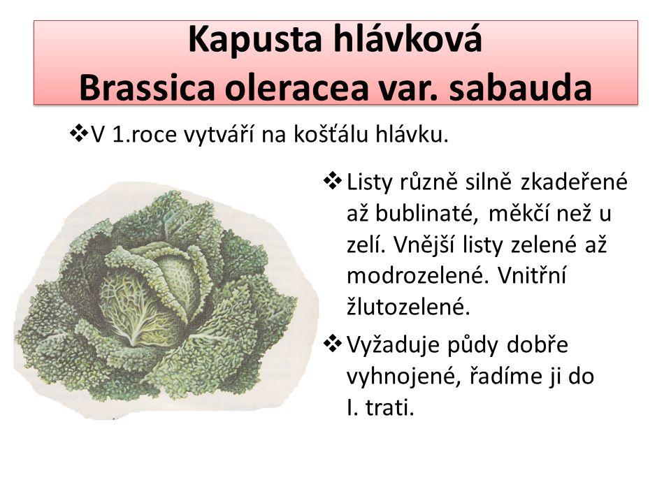 Kapusta hlávková Brassica oleracea var. sabauda  Listy různě silně zkadeřené až bublinaté, měkčí než u zelí. Vnější listy zelené až modrozelené. Vnit