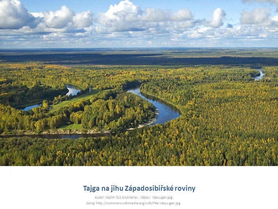 Tajga na jihu Západosibiřské roviny Autor: Vadim tLS Andrianov, Název: Vasyugan.jpg Zdroj: http://commons.wikimedia.org/wiki/File:Vasyugan.jpg
