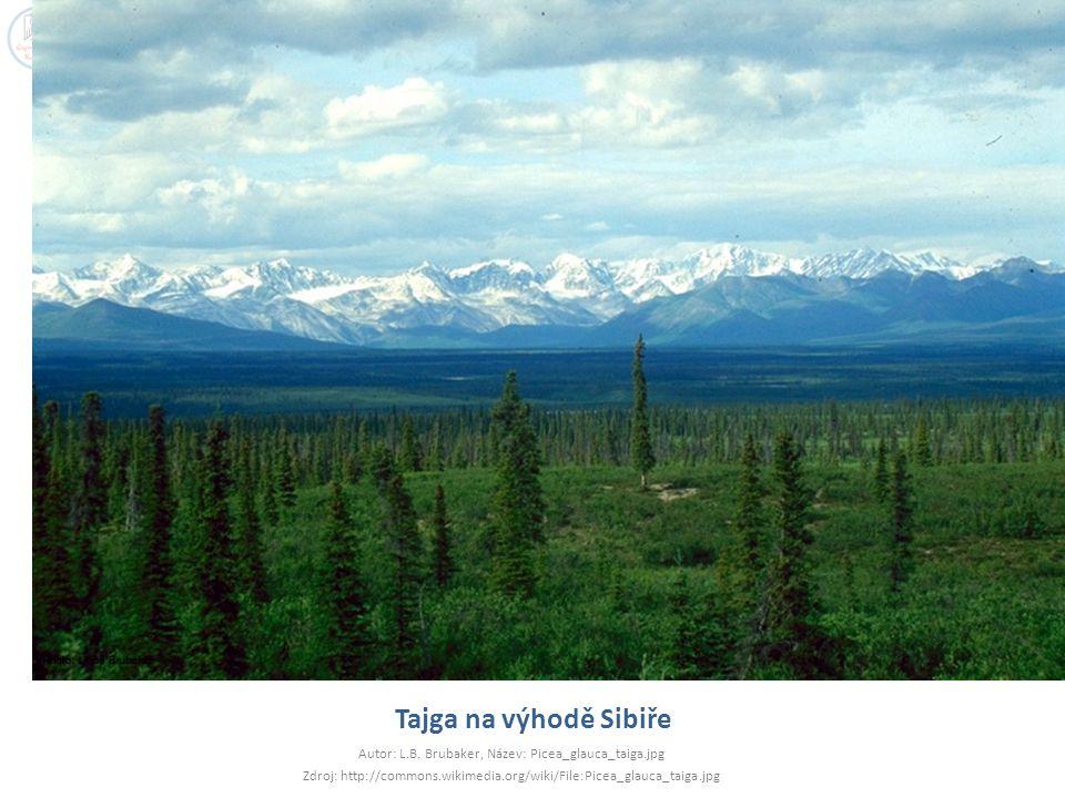 Tajga na výhodě Sibiře Autor: L.B. Brubaker, Název: Picea_glauca_taiga.jpg Zdroj: http://commons.wikimedia.org/wiki/File:Picea_glauca_taiga.jpg