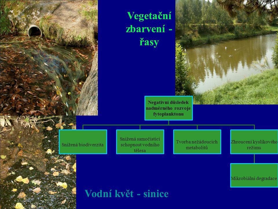 Vegetační zbarvení - řasy Vodní květ - sinice