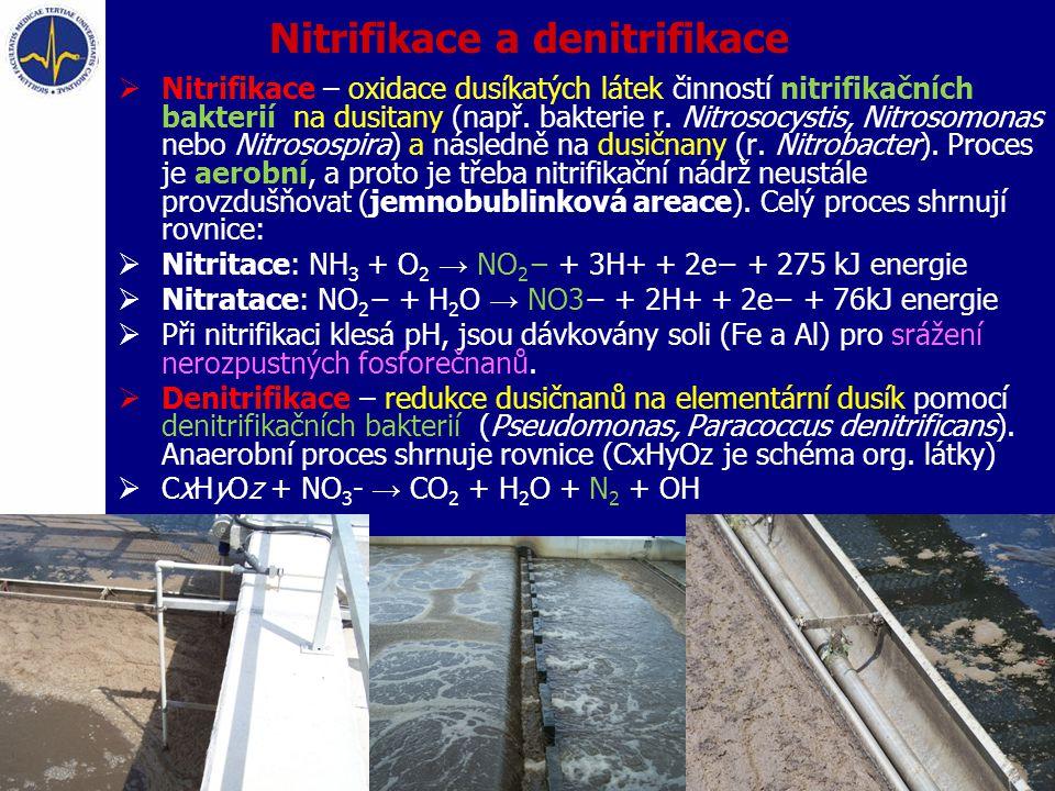 Nitrifikace a denitrifikace  Nitrifikace – oxidace dusíkatých látek činností nitrifikačních bakterií na dusitany (např. bakterie r. Nitrosocystis, Ni