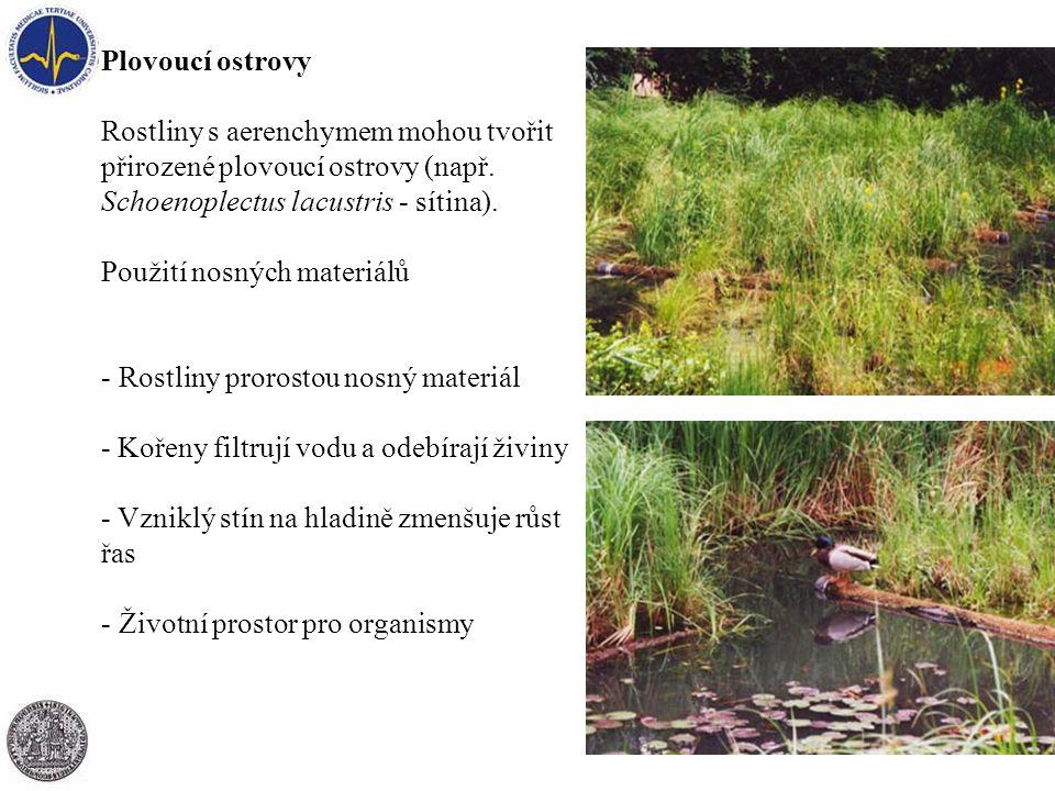 Plovoucí ostrovy Rostliny s aerenchymem mohou tvořit přirozené plovoucí ostrovy (např.