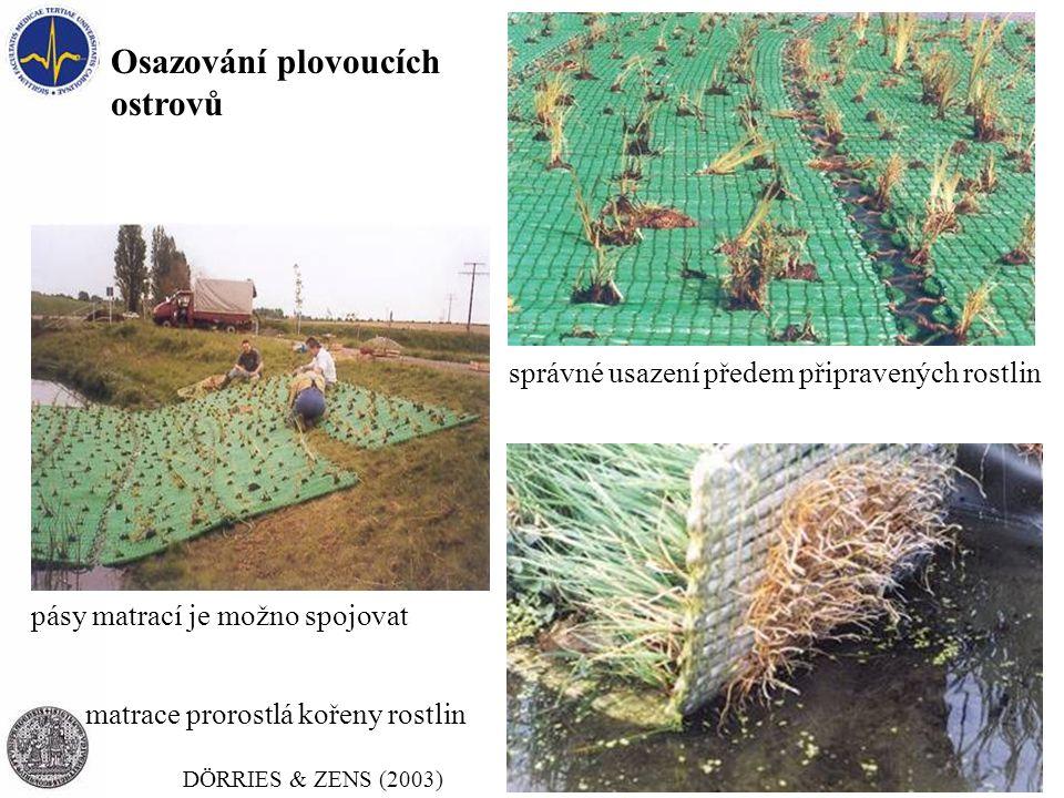 Osazování plovoucích ostrovů pásy matrací je možno spojovat správné usazení předem připravených rostlin DÖRRIES & ZENS (2003) matrace prorostlá kořeny rostlin