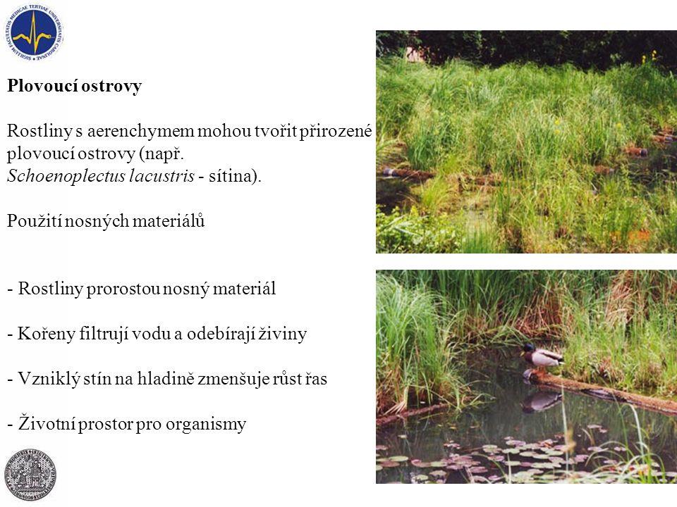 Plovoucí ostrovy Rostliny s aerenchymem mohou tvořit přirozené plovoucí ostrovy (např. Schoenoplectus lacustris - sítina). Použití nosných materiálů -