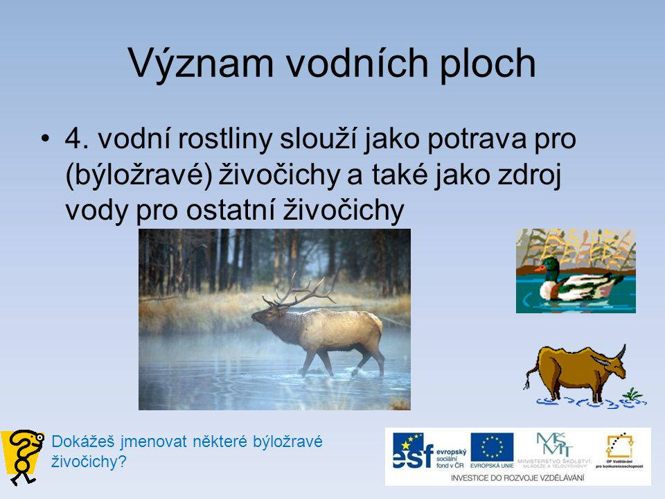 Význam vodních ploch 4. vodní rostliny slouží jako potrava pro (býložravé) živočichy a také jako zdroj vody pro ostatní živočichy Dokážeš jmenovat něk