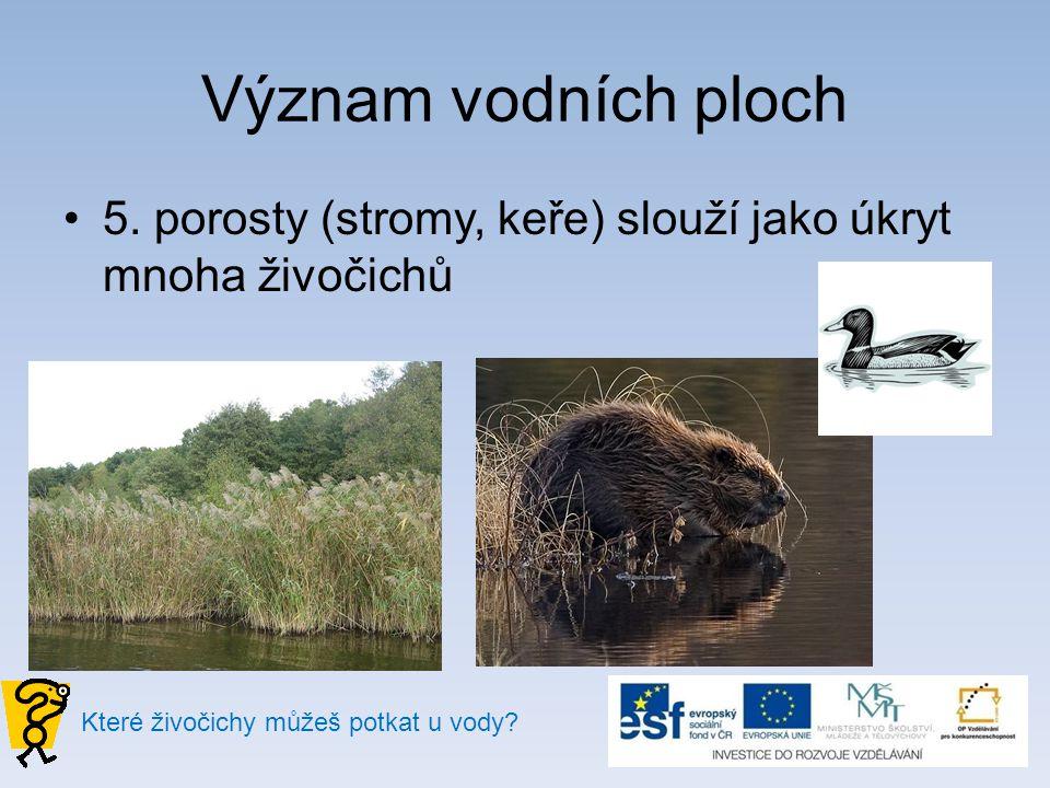 Význam vodních ploch 5. porosty (stromy, keře) slouží jako úkryt mnoha živočichů Které živočichy můžeš potkat u vody?