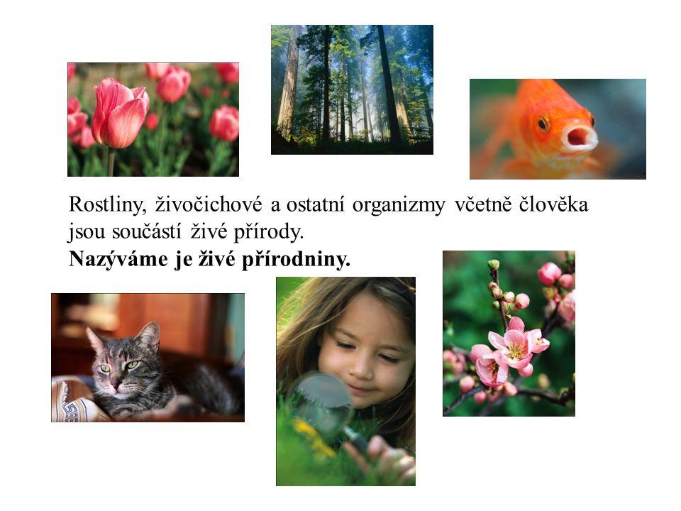 Rostliny, živočichové a ostatní organizmy včetně člověka jsou součástí živé přírody. Nazýváme je živé přírodniny.