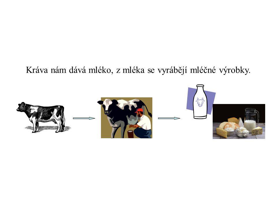 Kráva nám dává mléko, z mléka se vyrábějí mléčné výrobky.
