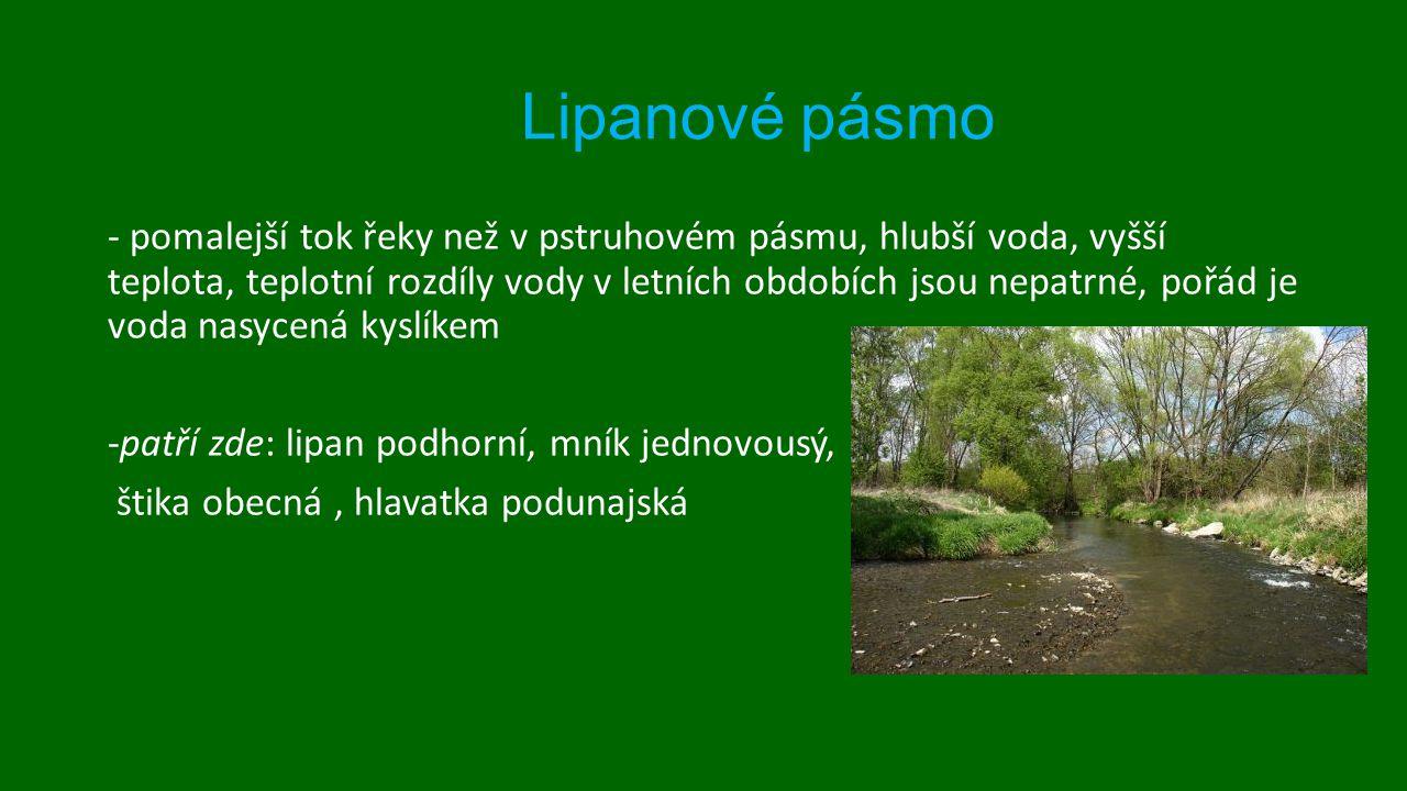 Lipanové pásmo štika obecná Lipan podhorní