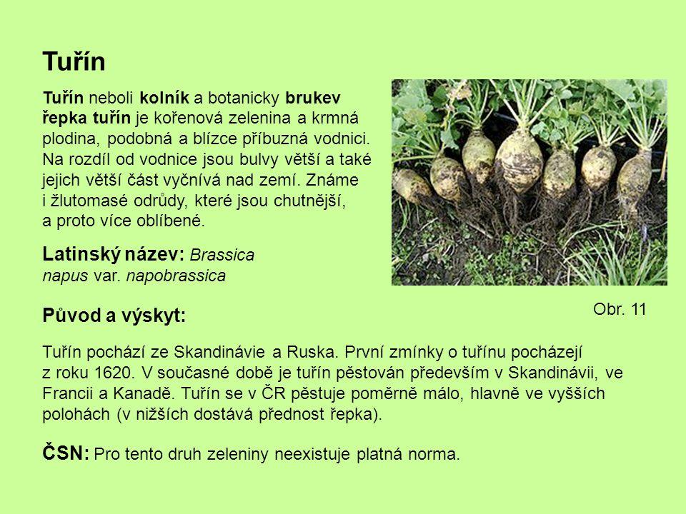 Tuřín Tuřín neboli kolník a botanicky brukev řepka tuřín je kořenová zelenina a krmná plodina, podobná a blízce příbuzná vodnici. Na rozdíl od vodnice