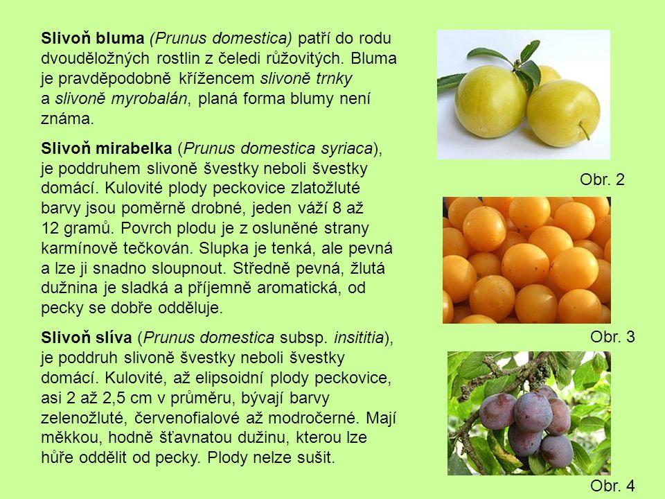 Slivoň bluma (Prunus domestica) patří do rodu dvouděložných rostlin z čeledi růžovitých. Bluma je pravděpodobně křížencem slivoně trnky a slivoně myro