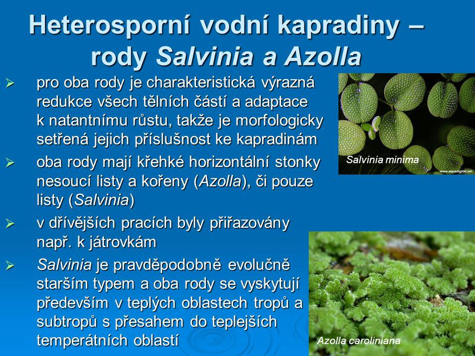 Heterosporní vodní kapradiny – rody Salvinia a Azolla  pro oba rody je charakteristická výrazná redukce všech tělních částí a adaptace k natantnímu růstu, takže je morfologicky setřená jejich příslušnost ke kapradinám  oba rody mají křehké horizontální stonky nesoucí listy a kořeny (Azolla), či pouze listy (Salvinia)  v dřívějších pracích byly přiřazovány např.