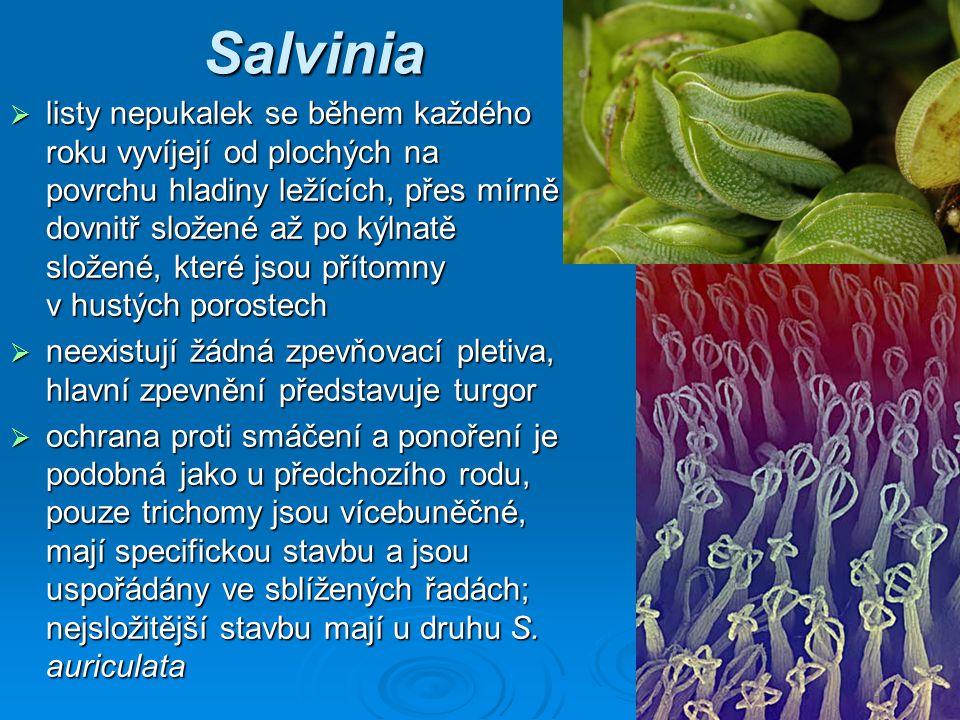 Salvinia  listy nepukalek se během každého roku vyvíjejí od plochých na povrchu hladiny ležících, přes mírně dovnitř složené až po kýlnatě složené, které jsou přítomny v hustých porostech  neexistují žádná zpevňovací pletiva, hlavní zpevnění představuje turgor  ochrana proti smáčení a ponoření je podobná jako u předchozího rodu, pouze trichomy jsou vícebuněčné, mají specifickou stavbu a jsou uspořádány ve sblížených řadách; nejsložitější stavbu mají u druhu S.
