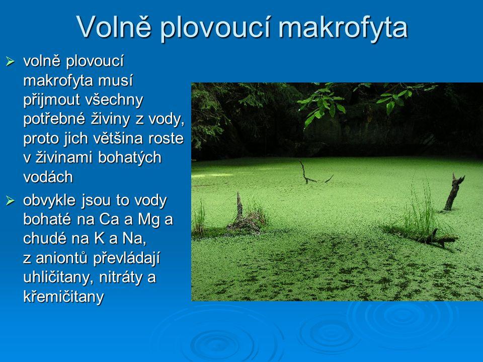 Volně plovoucí makrofyta  volně plovoucí makrofyta musí přijmout všechny potřebné živiny z vody, proto jich většina roste v živinami bohatých vodách  obvykle jsou to vody bohaté na Ca a Mg a chudé na K a Na, z aniontů převládají uhličitany, nitráty a křemičitany