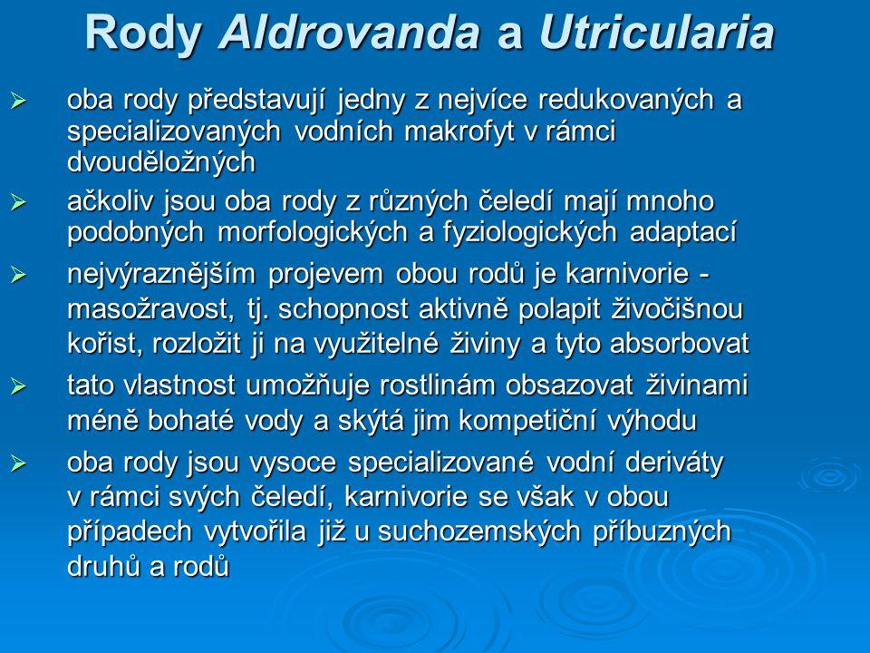 Rody Aldrovanda a Utricularia  oba rody představují jedny z nejvíce redukovaných a specializovaných vodních makrofyt v rámci dvouděložných  ačkoliv