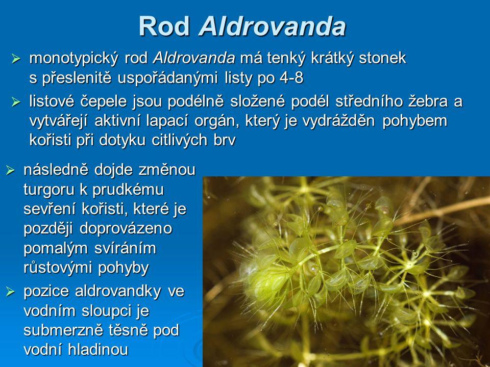 Rod Aldrovanda  následně dojde změnou turgoru k prudkému sevření kořisti, které je později doprovázeno pomalým svíráním růstovými pohyby  pozice ald
