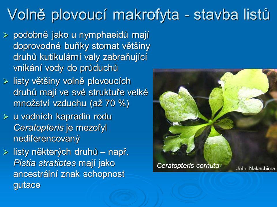 Volně plovoucí makrofyta - stavba listů  podobně jako u nymphaeidů mají doprovodné buňky stomat většiny druhů kutikulární valy zabraňující vnikání vody do průduchů  listy většiny volně plovoucích druhů mají ve své struktuře velké množství vzduchu (až 70 %)  u vodních kapradin rodu Ceratopteris je mezofyl nediferencovaný  listy některých druhů – např.