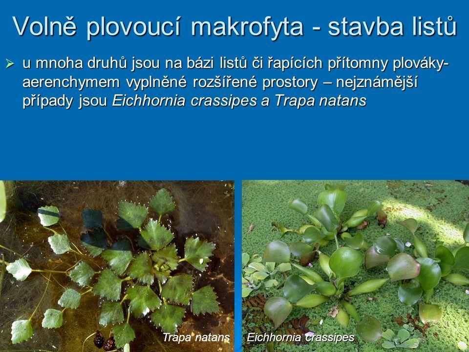 Volně plovoucí makrofyta - stavba listů  u mnoha druhů jsou na bázi listů či řapících přítomny plováky- aerenchymem vyplněné rozšířené prostory – nejznámější případy jsou Eichhornia crassipes a Trapa natans Trapa natans Eichhornia crassipes