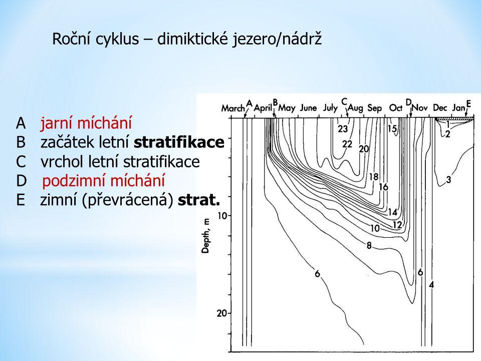Roční cyklus – dimiktické jezero/nádrž A jarní míchání B začátek letní stratifikace C vrchol letní stratifikace D podzimní míchání E zimní (převrácená