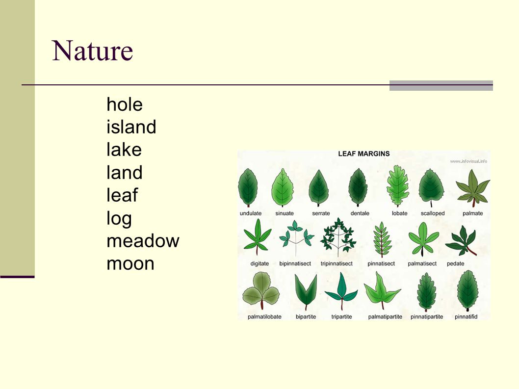 Nature hole island lake land leaf log meadow moon