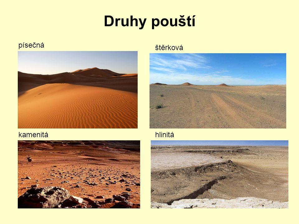 SAHARA skalní kresba slona: Sahara byla podle výzkumů před 5 až 7 tisíci lety poměrně úrodnou oblastí.