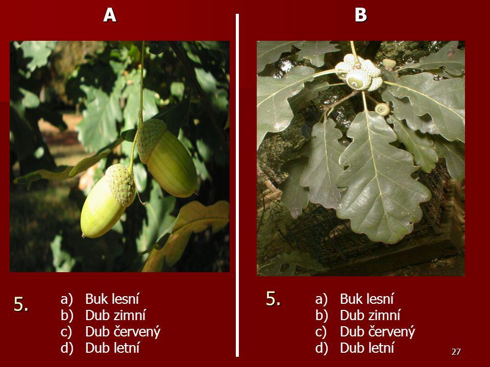 27AB a) a)Buk lesní b) b)Dub zimní c) c)Dub červený d) d)Dub letní a) a)Buk lesní b) b)Dub zimní c) c)Dub červený d) d)Dub letní 5. 5.
