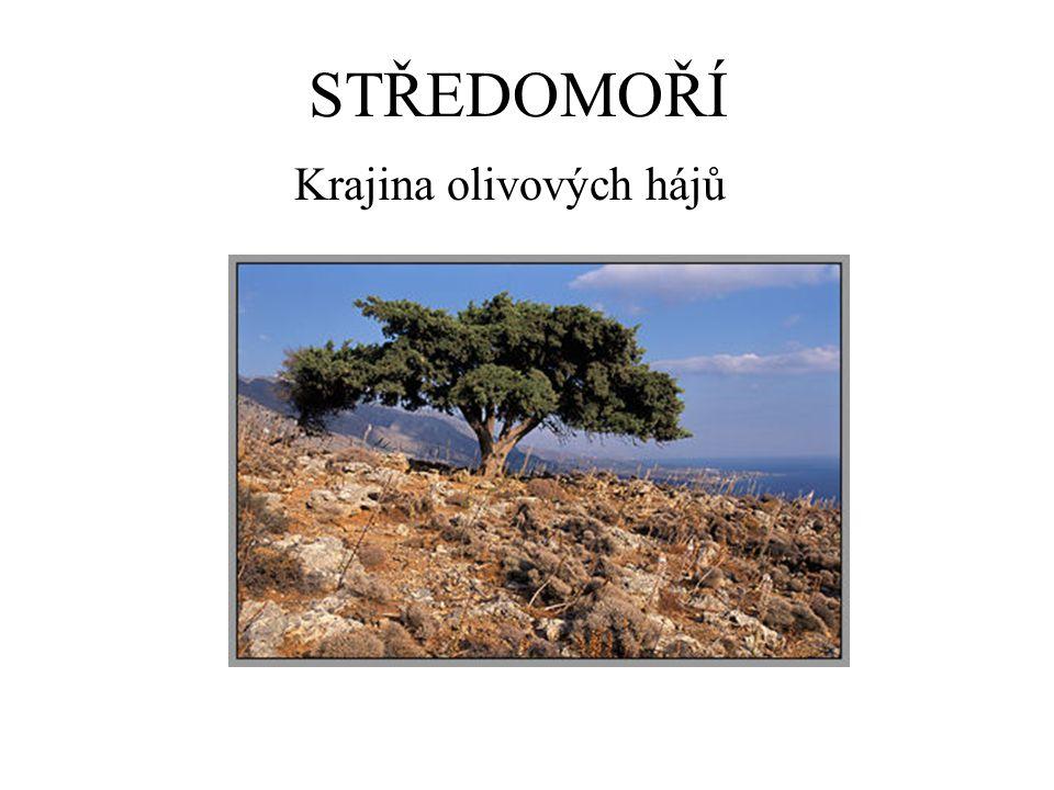 STŘEDOMOŘÍ Krajina olivových hájů