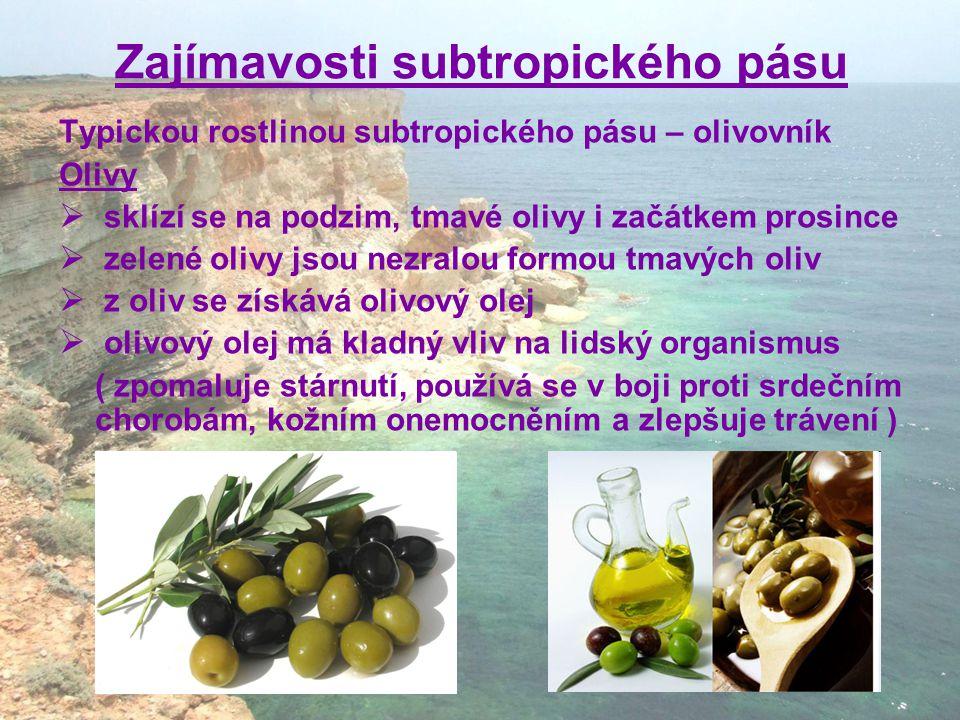 Zajímavosti subtropického pásu Typickou rostlinou subtropického pásu – olivovník Olivy  sklízí se na podzim, tmavé olivy i začátkem prosince  zelené olivy jsou nezralou formou tmavých oliv  z oliv se získává olivový olej  olivový olej má kladný vliv na lidský organismus ( zpomaluje stárnutí, používá se v boji proti srdečním chorobám, kožním onemocněním a zlepšuje trávení )