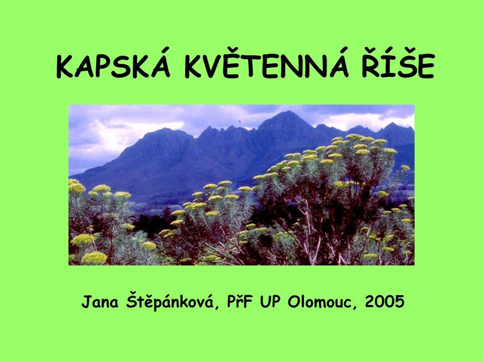 KAPSKÁ KVĚTENNÁ ŘÍŠE Jana Štěpánková, PřF UP Olomouc, 2005