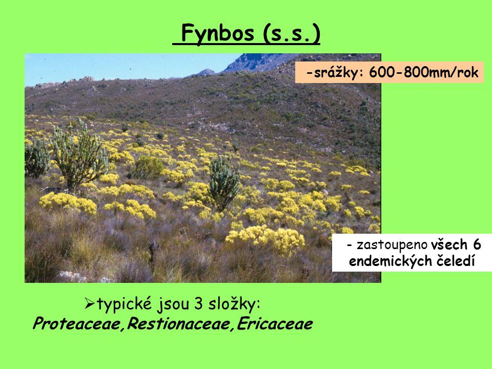 Fynbos (s.s.) -srážky: 600-800mm/rok  typické jsou 3 složky: Proteaceae,Restionaceae,Ericaceae - zastoupeno všech 6 endemických čeledí