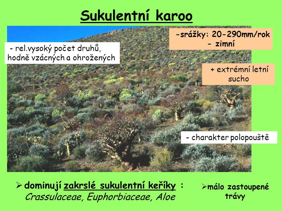Sukulentní karoo -srážky: 20-290mm/rok - zimní + extrémní letní sucho - charakter polopouště  dominují zakrslé sukulentní keříky : Crassulaceae, Euph