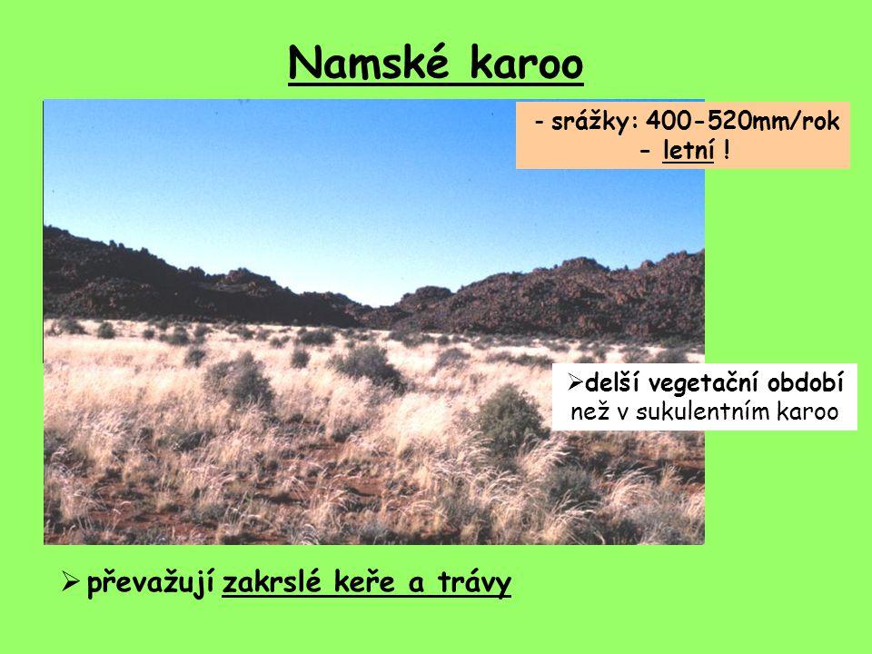 Namské karoo - srážky: 400-520mm/rok - letní !  delší vegetační období než v sukulentním karoo  převažují zakrslé keře a trávy