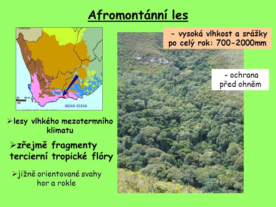 Afromontánní les - vysoká vlhkost a srážky po celý rok: 700-2000mm  zřejmě fragmenty tercierní tropické flóry  jižně orientované svahy hor a rokle  lesy vlhkého mezotermního klimatu - ochrana před ohněm