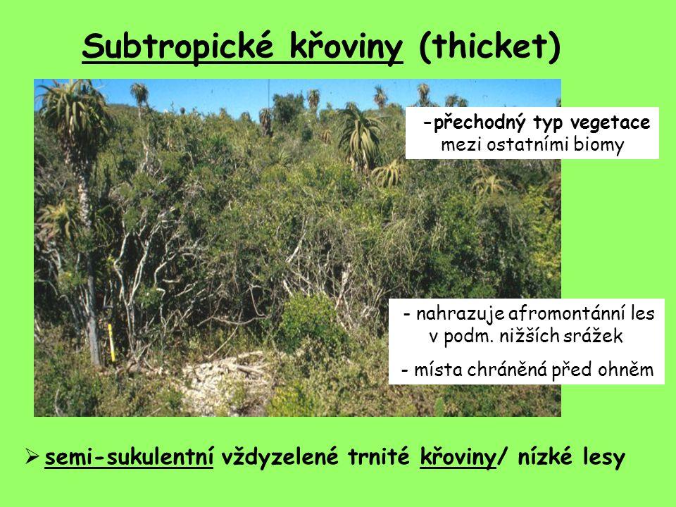 Subtropické křoviny (thicket) -přechodný typ vegetace mezi ostatními biomy  semi-sukulentní vždyzelené trnité křoviny/ nízké lesy - nahrazuje afromontánní les v podm.