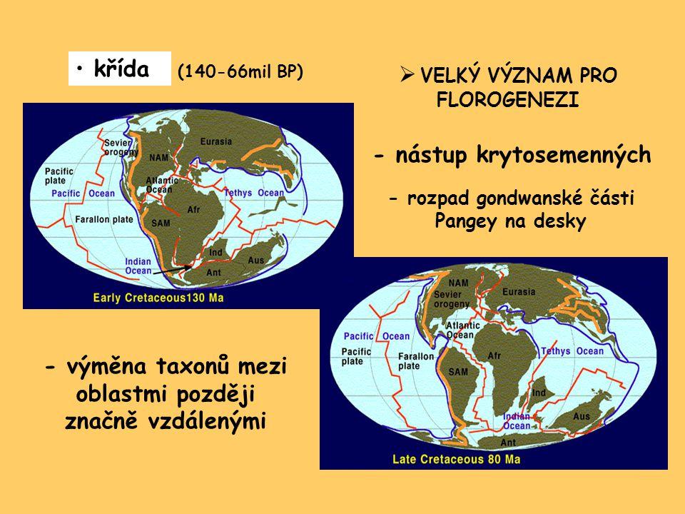 křída (140-66mil BP)  VELKÝ VÝZNAM PRO FLOROGENEZI - nástup krytosemenných - výměna taxonů mezi oblastmi později značně vzdálenými - rozpad gondwanské části Pangey na desky