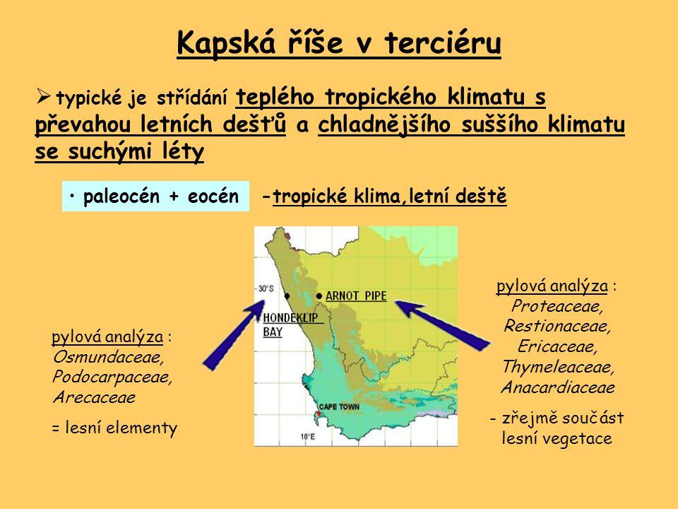 Kapská říše v terciéru  typické je střídání teplého tropického klimatu s převahou letních dešťů a chladnějšího suššího klimatu se suchými léty paleocén + eocén -tropické klima,letní deště pylová analýza : Proteaceae, Restionaceae, Ericaceae, Thymeleaceae, Anacardiaceae - zřejmě součást lesní vegetace pylová analýza : Osmundaceae, Podocarpaceae, Arecaceae = lesní elementy