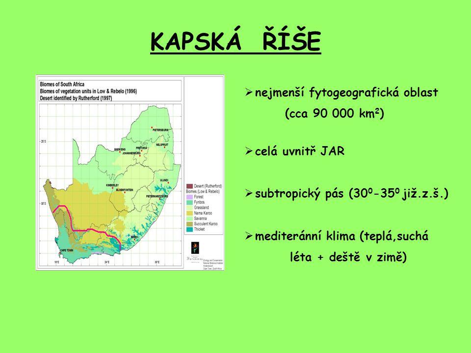 KAPSKÁ ŘÍŠE  nejmenší fytogeografická oblast (cca 90 000 km 2 )  celá uvnitř JAR  subtropický pás (30 0 -35 0 již.z.š.)  mediteránní klima (teplá,suchá léta + deště v zimě)