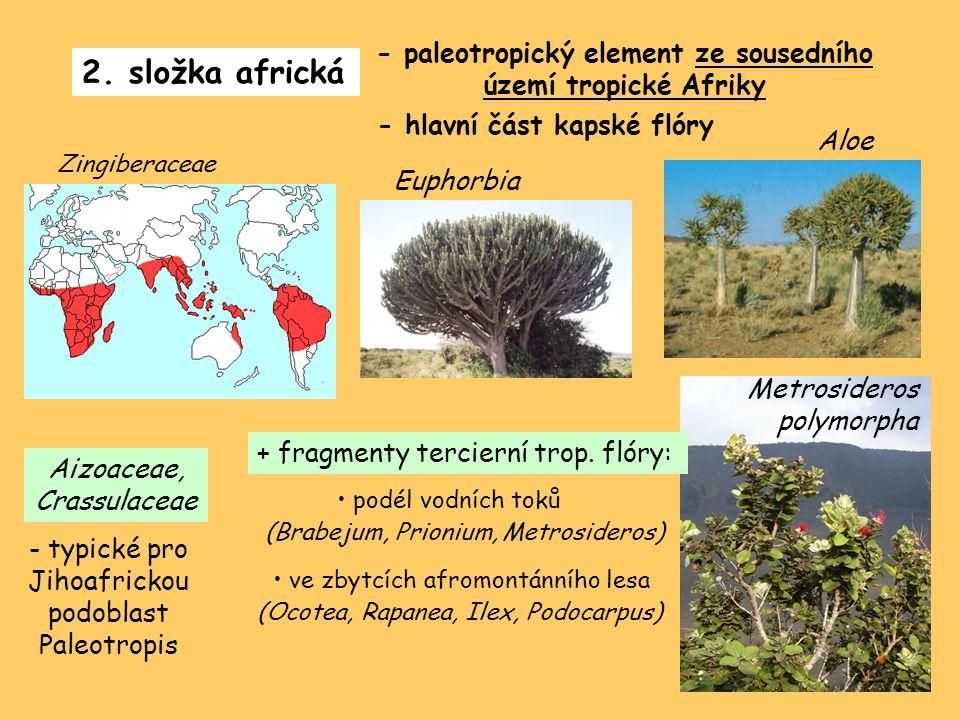 2. složka africká - paleotropický element ze sousedního území tropické Afriky - hlavní část kapské flóry Zingiberaceae Euphorbia Aloe Aizoaceae, Crass