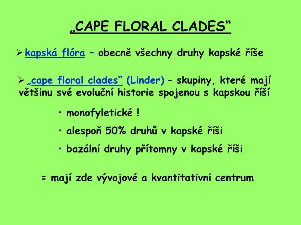 """""""CAPE FLORAL CLADES  kapská flóra – obecně všechny druhy kapské říše  """"cape floral clades (Linder) – skupiny, které mají většinu své evoluční historie spojenou s kapskou říší monofyletické ."""